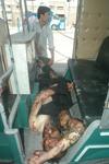 Quetta - Suicide Bombing