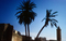 Palm Trees and the Mineret