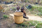 Kisoro Pygmies