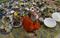 Vesak Festivals