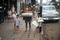 Jakarta Street Vendors