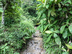 Jungle Trail - Dien Bien Phu